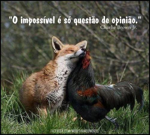 O impossível é só uma questão de opinião