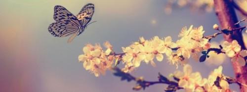 primavera-663x248.jpg