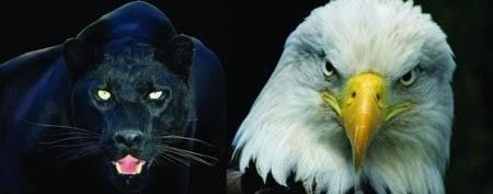 pantera e aguia.jpg