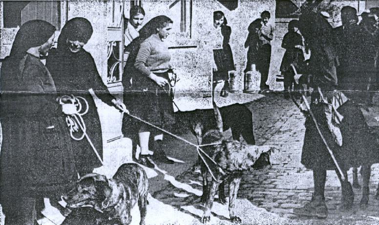 49 a2 - concurso cães castro 1971.jpg
