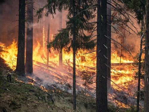 forest-fire-2268725_1280.jpg