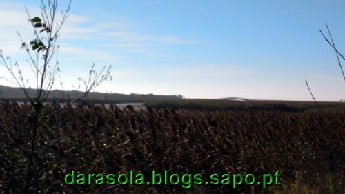 Passadico_Esmoriz_17.jpg