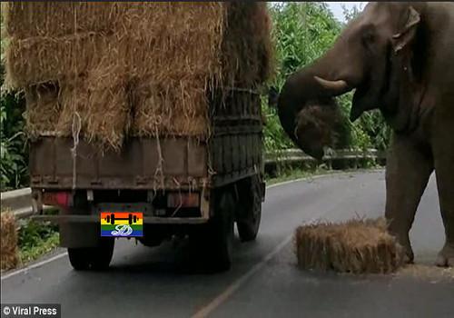 Hd Elefante faz parar o trânsito.jpg