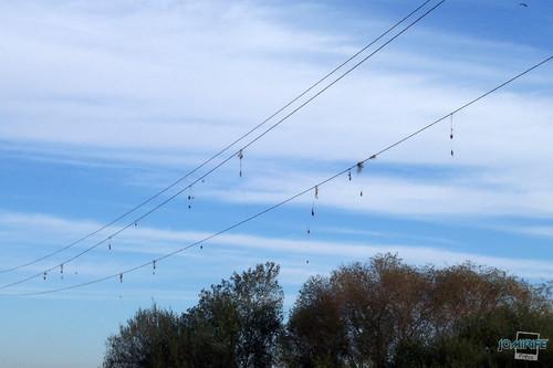 Mau sítio para pesca por fios alta tensão (3)