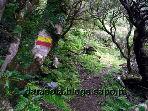 Azores_flores_faja_grande_20.JPG