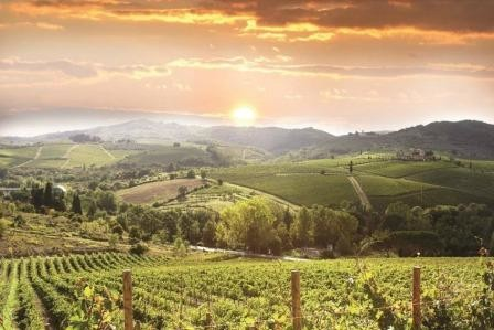 beautiful_vineyard_7.jpg