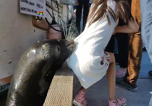 HD Leão-marinho arrasta menina para o rio.jpg