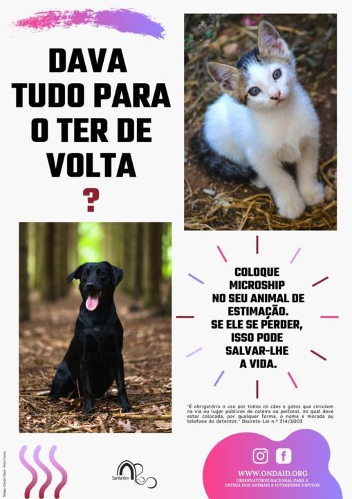 Campanha Animais.jpg
