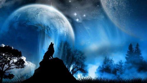 Lobo solitário.jpg
