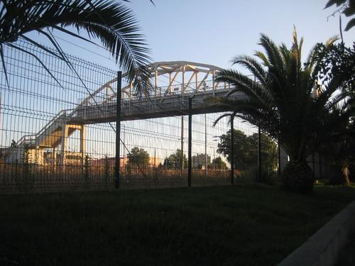 cmb palmeiras 014.JPG