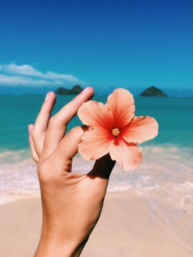 e572e7029b02d99b1c6f9faca5d75090--beach-flowers-br