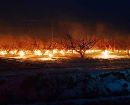 protecting-apricot-field-from-frost-italy-february
