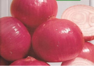 cebola rosa.png
