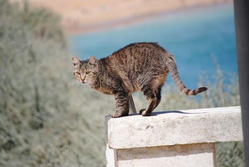 gato pronto a saltar