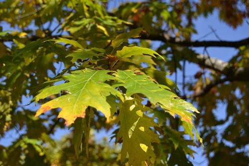 Folha de Outono.jpg