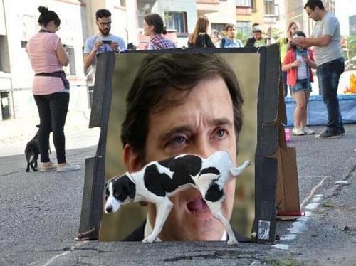 O cão e Passos Coelho