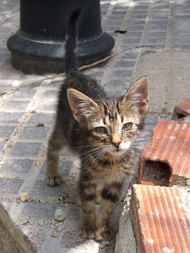 186n-gato-abandonado-na-rua.jpg