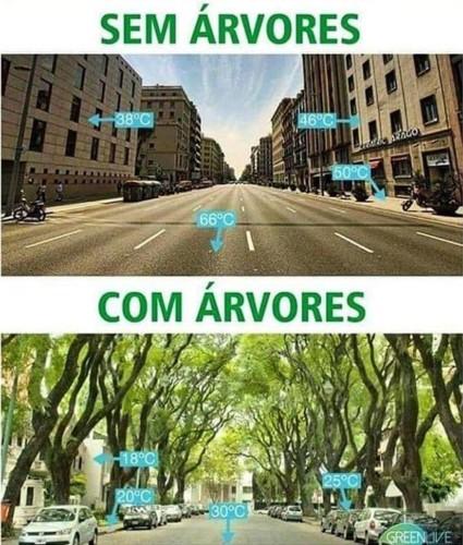 ARVORES ARREFECEM.jpg