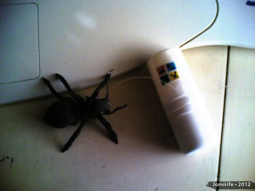 Geocaching com uma aranha para dar uns sustos!