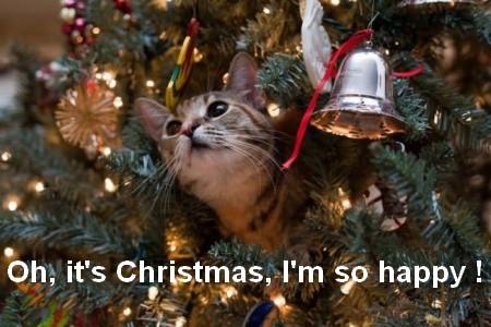 gato-natal-1.jpg
