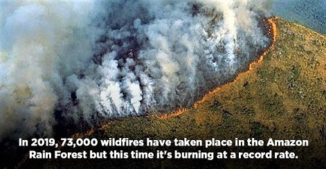 amazon_forest_fire_1566543213_800x420.jpg