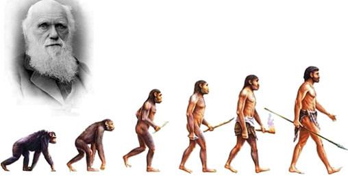 Charles Darwin e a Teoria da Evolução.jpg
