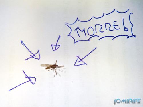 Mosquito morto Dead mosquito
