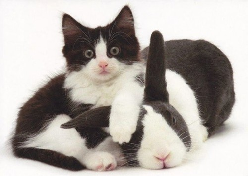 gato-e-lebre.jpg