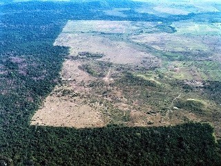 An area of the Amazon devastated by deforestation,