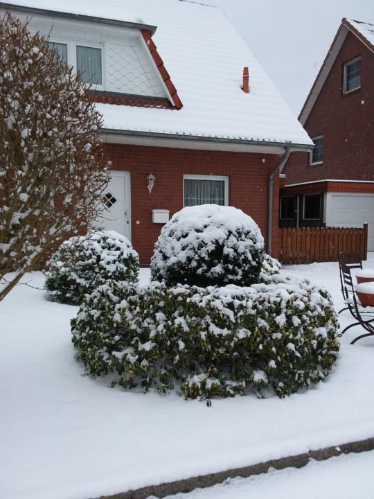 2021-02-09 Neve (5).jpg