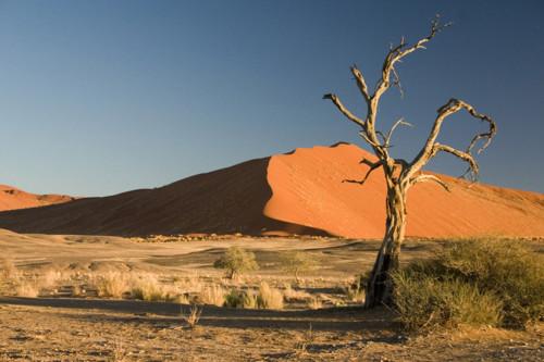 site-como-c3a9-a-vida-em-um-deserto.jpg