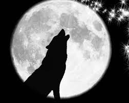 wolf11.jpg