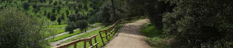 Uma visita ao Parque Florestal de Monsanto