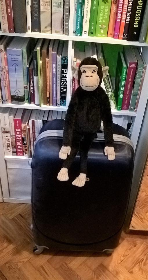 Macaco José pronto para viajar.jpg