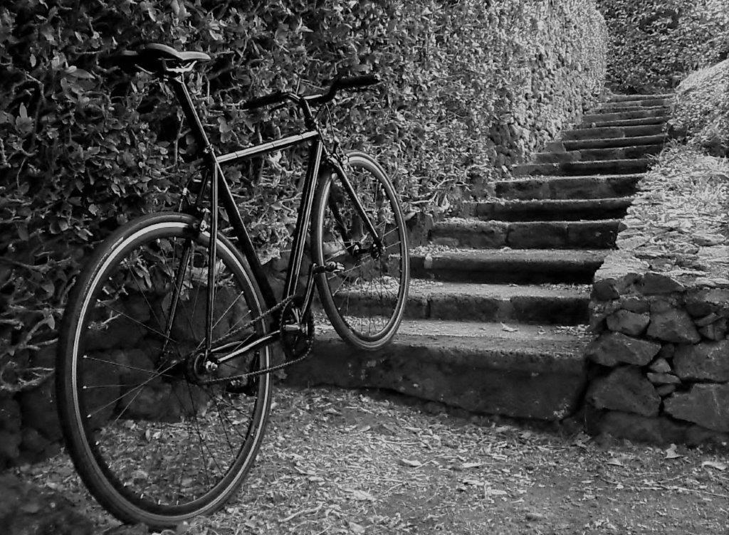roll_escada.jpg