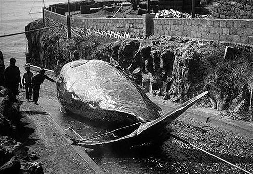 baleia2.jpg