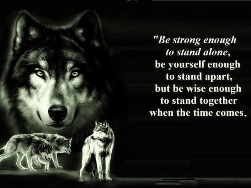 wolfx1.jpg