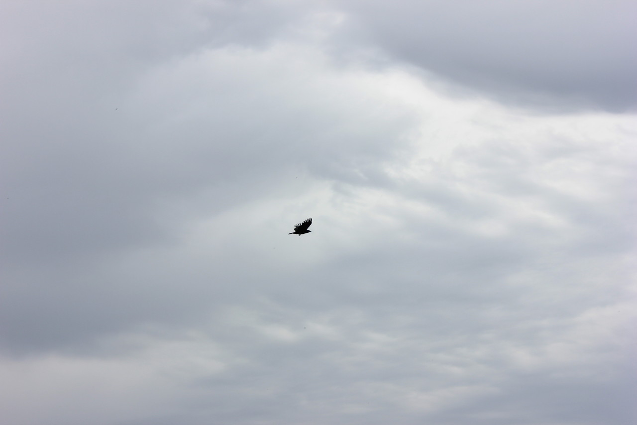 corvo.JPG