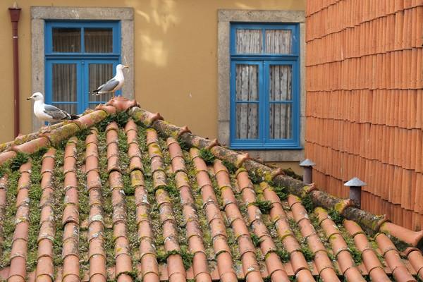Porto2018_1_600.jpg