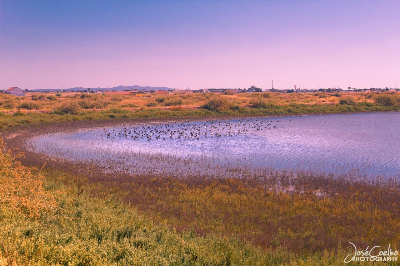 salinas do samouco observação de aves
