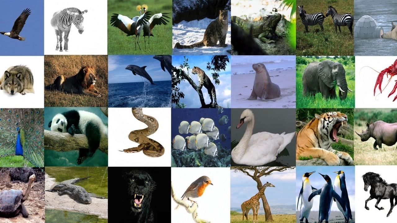 xama_animais.jpg