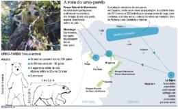 urso pardo em Portugal.jpg