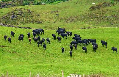 A paisagem de sossego com o gado bravo em fundo...
