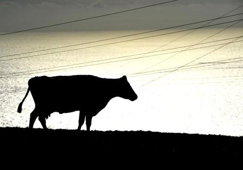 Uma silhueta animal em brilho, captada na Terceira em Setembro...