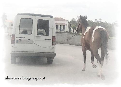 a cavalo dado não se olha o dente