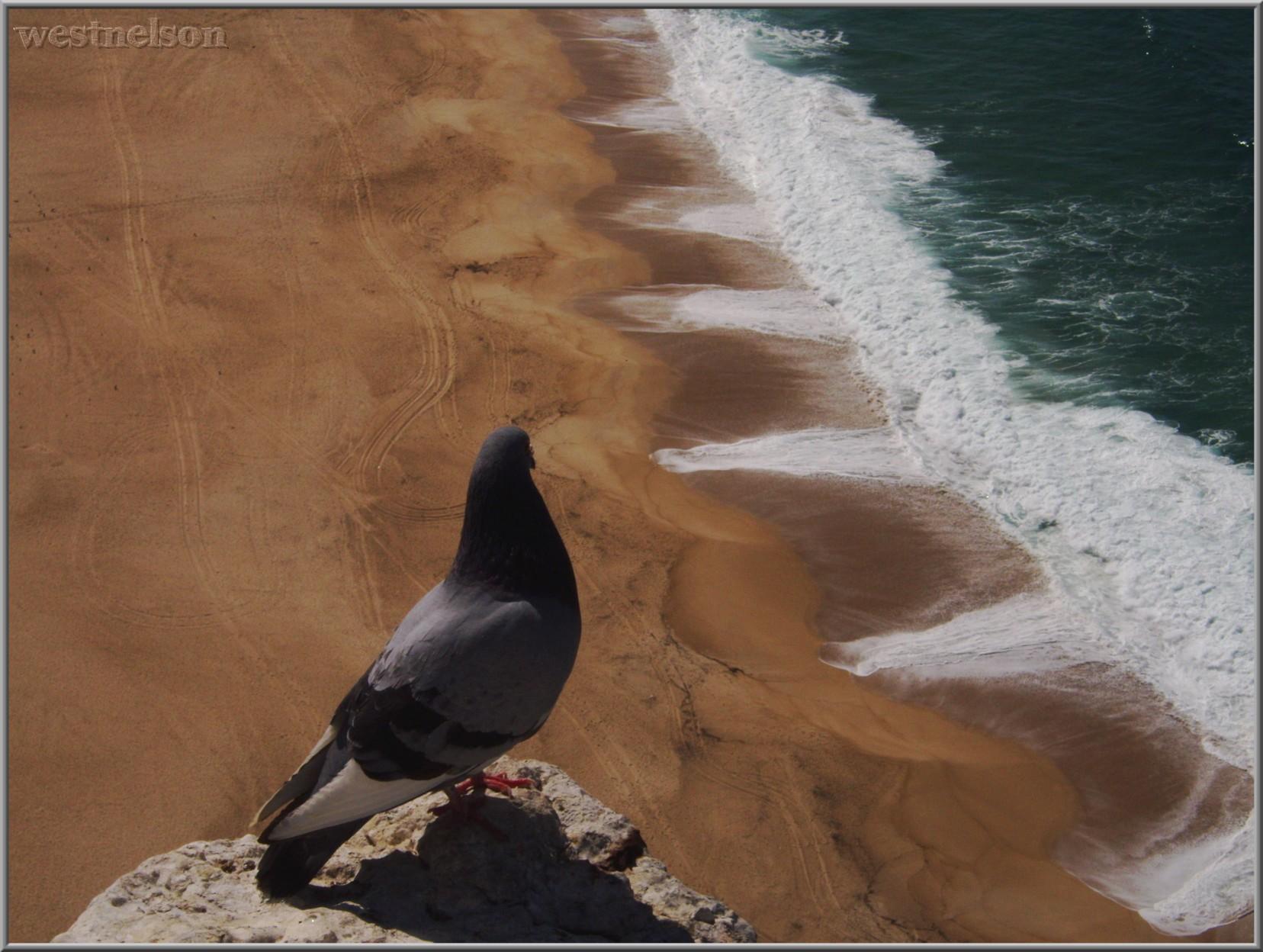 praia vista do Sítio da Nazaré