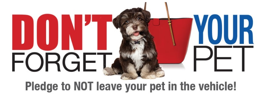 "Amostras Convio - Autocolante ""Don't Forget Your Pet "" - 17236471_ATfZ2"