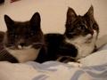 Gatos que conversam