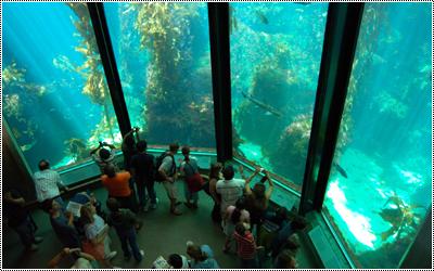 Monterey Bay Aquarium 17345209_qPyNU